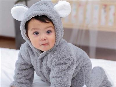 Medved zeka