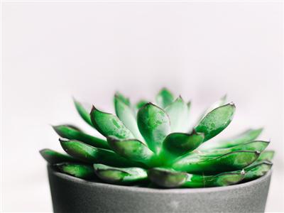 Kućne biljke