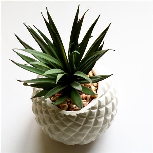 Listopadne biljke