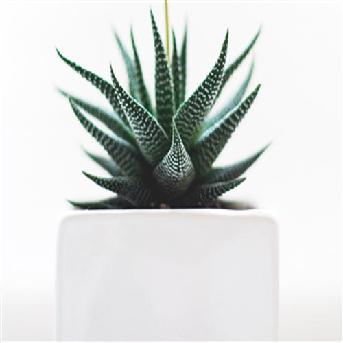 Zimzelene biljke