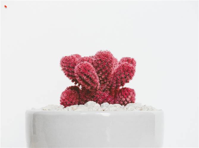 Prva biljka