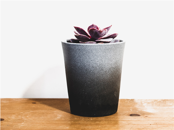 Deseta biljka