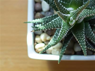 Jedanaesta biljka