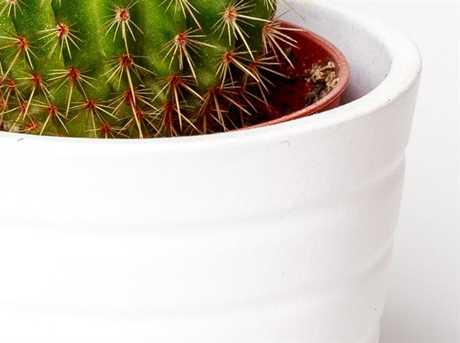 Trineaesta biljka