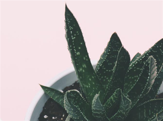 Četrnaesta biljka