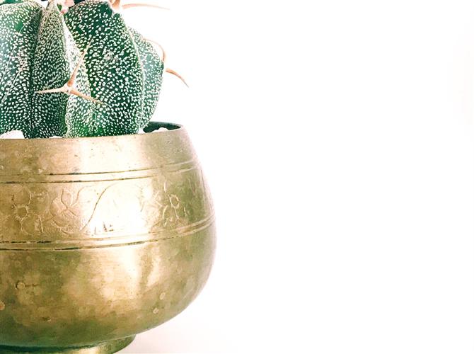 Petnaesta biljka