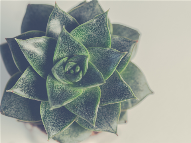 Druga biljka