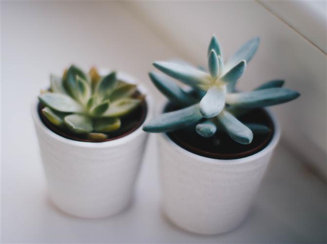 Treća biljka