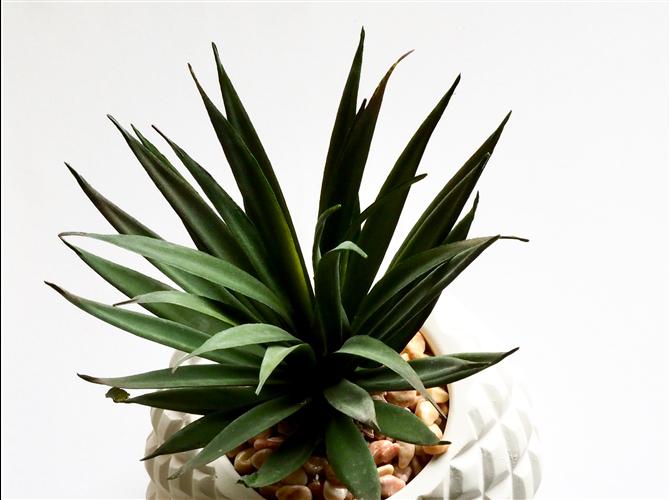 Peta biljka