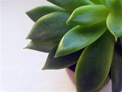 Šesta biljka