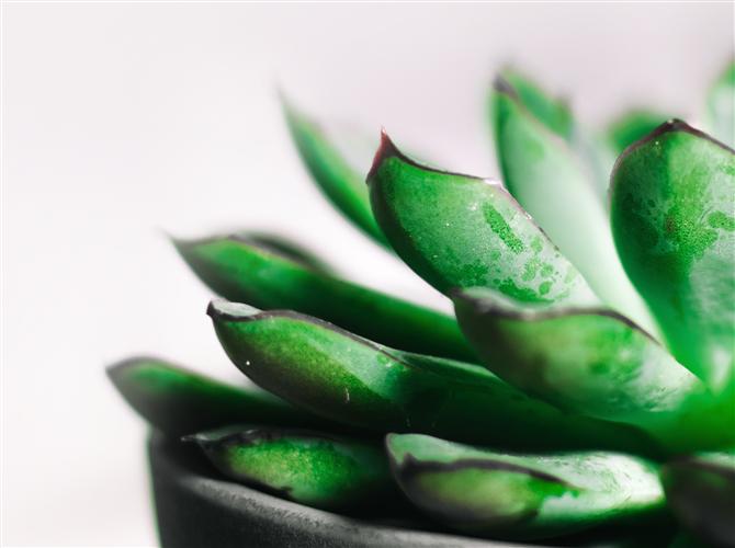 Sedma biljka