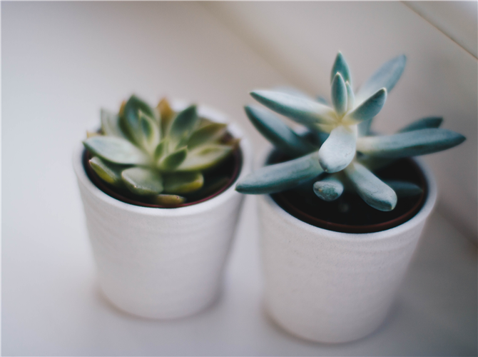 Osma biljka