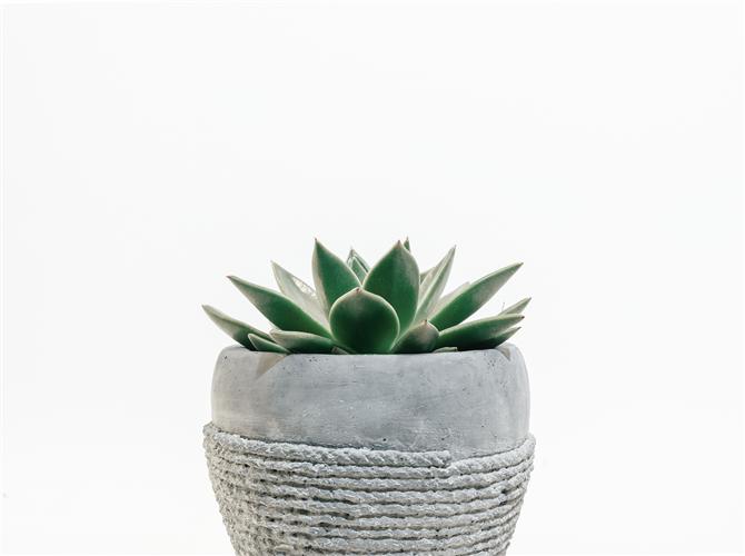Deveta biljka