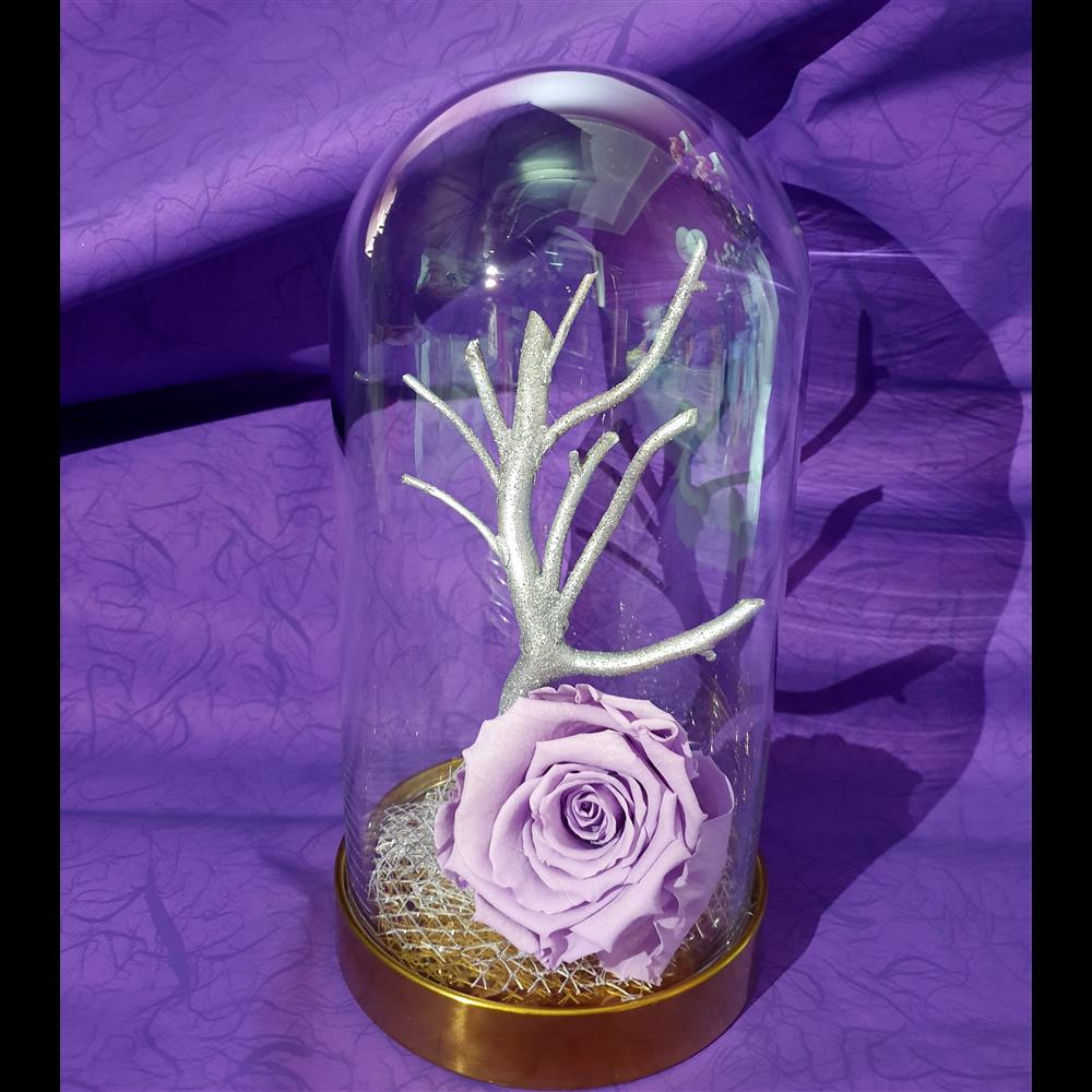 Lila dehidrirana ruža u staklenom zvonu