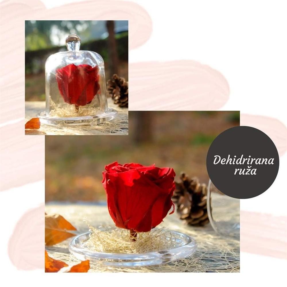 Crvena dehidrirana ruža u staklenom zvonu