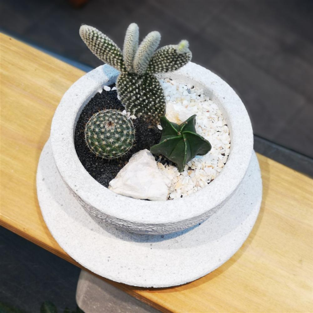 Aranžman Cactus trio